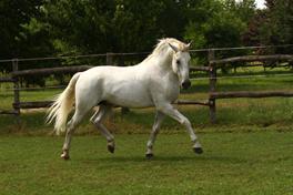 Ló mesterséges termékenyítés, 5497 Favory XXVIII-42