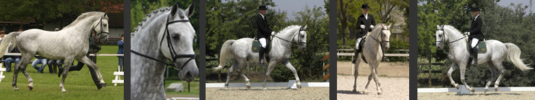 Ló mesterséges termékenyítés